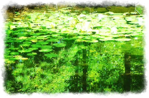 green pond, dappled light